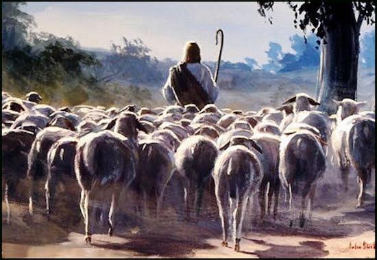 apascenta minhas ovelhas